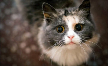 1080P Cat Wallpaper