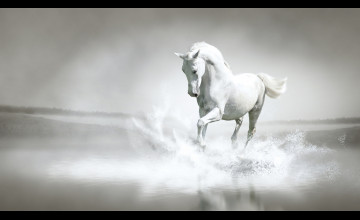 1920x1080 HD Horse Wallpapers