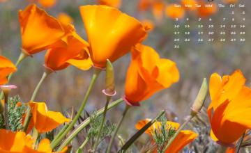 2016 May Desktop Wallpaper
