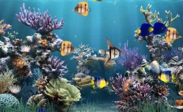3D Animated Aquarium Wallpaper