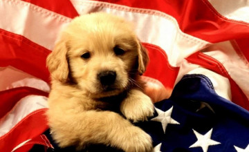 4th Of July Puppies Wallpapers