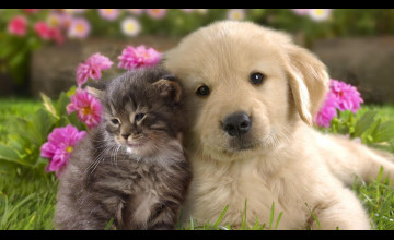 Adorable Cat and Dog Wallpaper