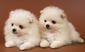 Adorable Puppy Wallpapers