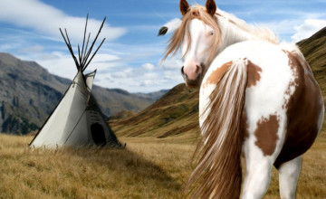 American Paint Horse Wallpapers