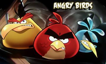 Angry Bird Wallpaper