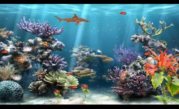 Animated Coral Reef Wallpaper