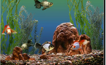 Animated Goldfish Wallpaper and Screensaver