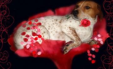 Anne Geddes Valentine\'s Wallpaper
