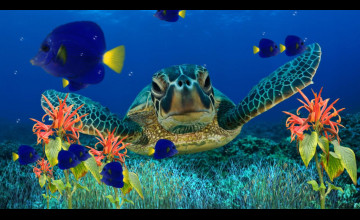 Aquarium Wallpaper for Windows 7