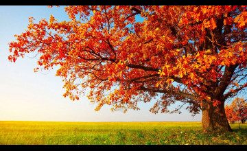 Autumn HD Wallpapers 1080p