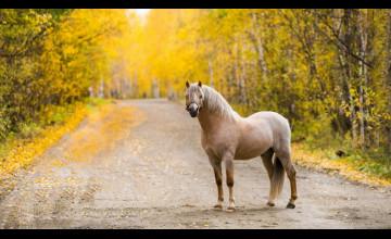 Autumn Horse Pictures Wallpaper