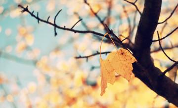 Autumn iPhone Wallpaper Tumblr