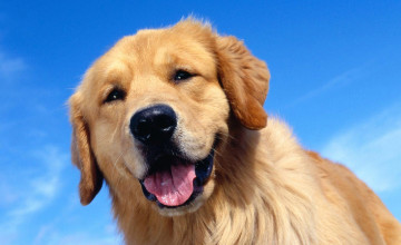 Awesome Wallpapers of Dogs