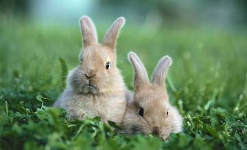 Baby Bunnies Wallpaper