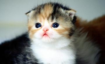 Baby Cats Wallpaper