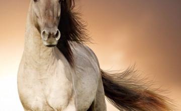 Background Horse