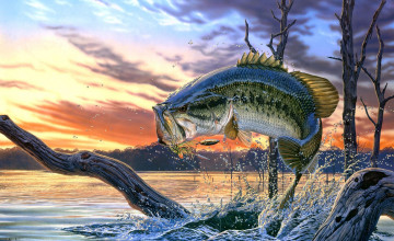 Bass Fishing Desktop Wallpaper