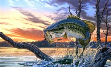 Bass Fishing Wallpaper
