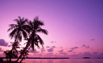Beach Palm Trees Wallpapers