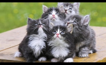 Beautiful Cats Pictures Wallpapers
