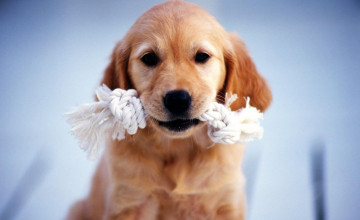 Beautiful Dogs Wallpaper HD