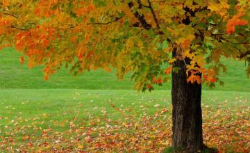 Beautiful Fall HD Wallpaper