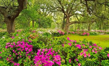 Beautiful Gardens Wallpapers
