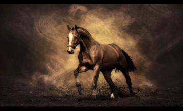 Beautiful Horse Desktop Wallpaper