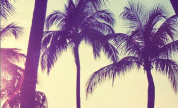 Beautiful Palm Trees iPhone Wallpapers