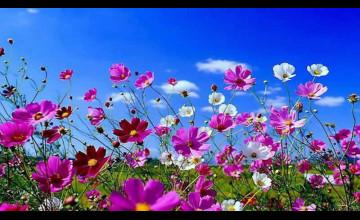 Beautiful Spring Desktop Wallpaper