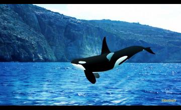 Beautiful Whales Desktop Wallpapers