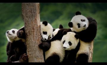 Bing Baby Animal Wallpaper
