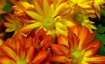 Bing Fall Flowers Wallpaper