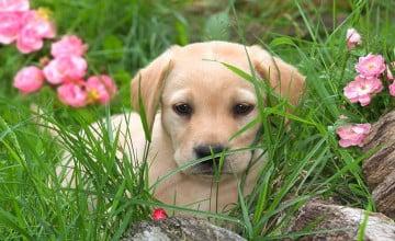 Bing Screensavers and Wallpaper Dogs