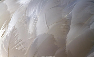Bing Wallpaper Feathers