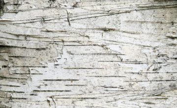 Birch Bark Wallpaper Canada