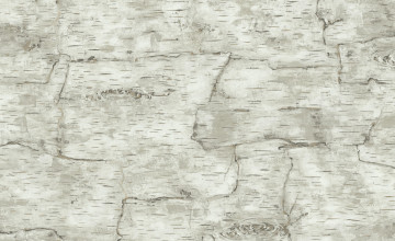 Birch Bark Wallpaper for Walls