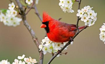 Bird Desktop Wallpaper Free