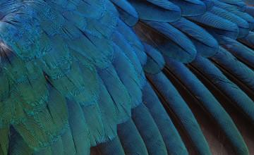Bird Feather Wallpaper
