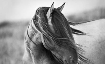 Black and White Horse Wallpaper