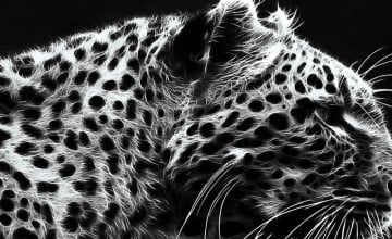 Black Cheetah Background