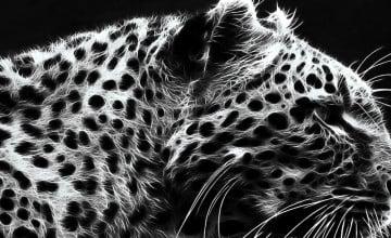 Black Cheetah Background
