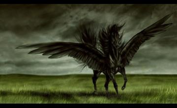 Black Horse Wallpaper HD