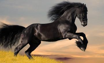 Black Horse Wallpaper