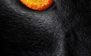 Black Panther iPhone Wallpaper