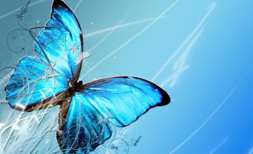 Blue Butterfly HD Wallpaper