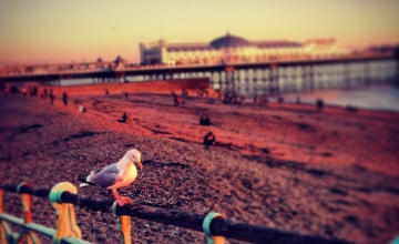 Brighton Background