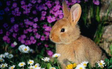 Bunny Wallpaper