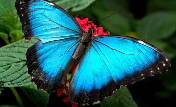 Butterfly HD Desktop Wallpaper
