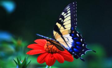 Butterfly Wallpaper Free Download Desktop